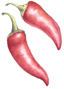 Peppers-LVogel